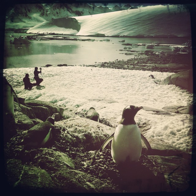 """Penguin on the Peninsula"" stock image"