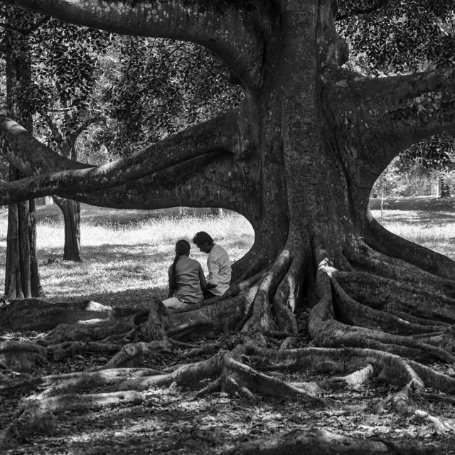 """UNDER THE TREE"" stock image"