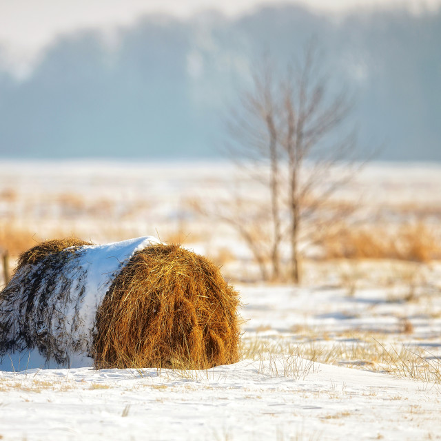 """""""Bale of hay in a field"""" stock image"""