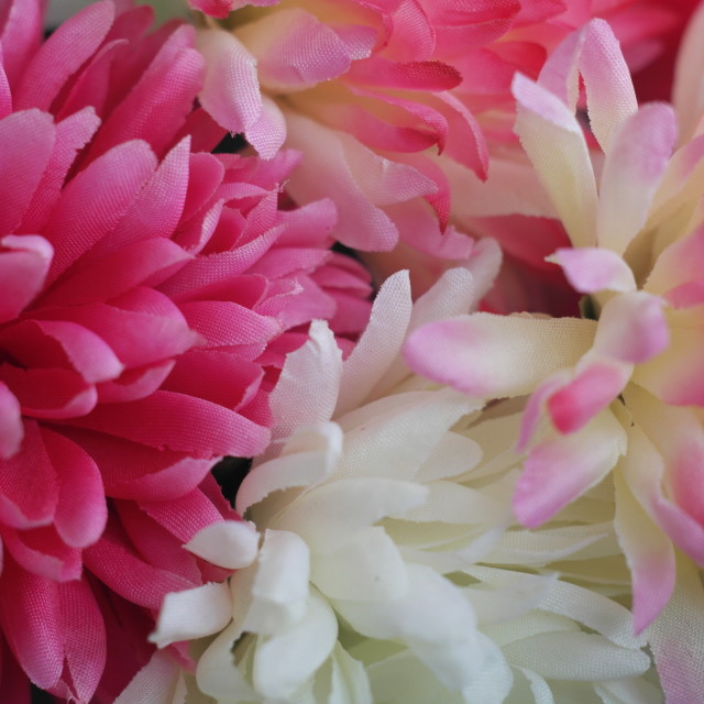 """Floral Soft Pink"" stock image"