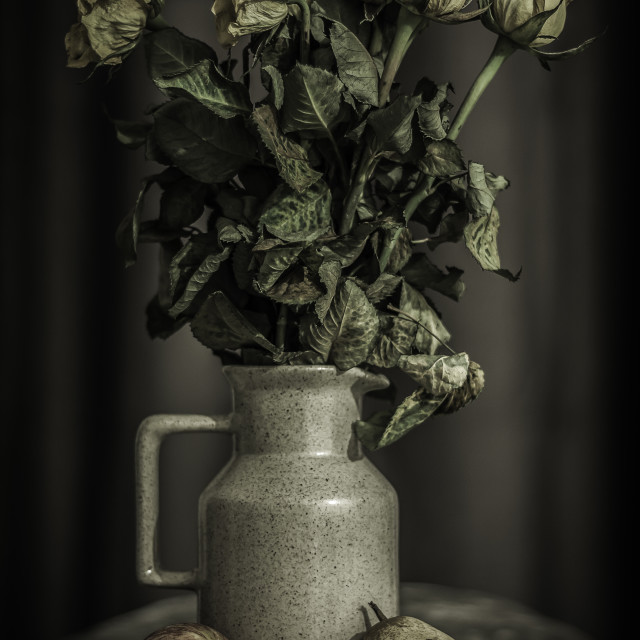 """dead roses I"" stock image"