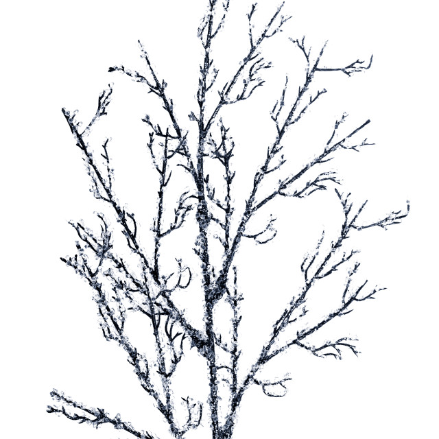 """""""Christmas decoration branches"""" stock image"""