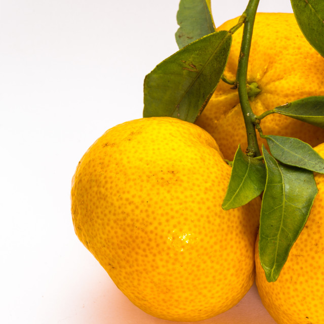 """""""tangerines"""" stock image"""