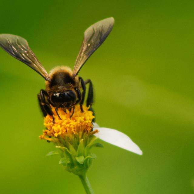 """Hard working bee"" stock image"