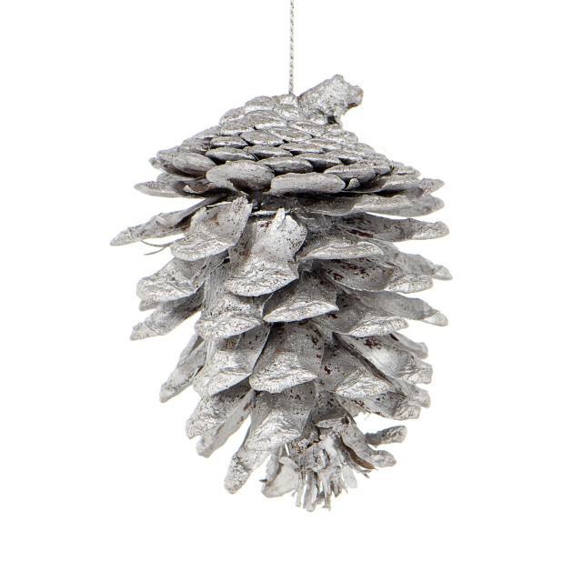 """""""Pine cone painted with white"""" stock image"""