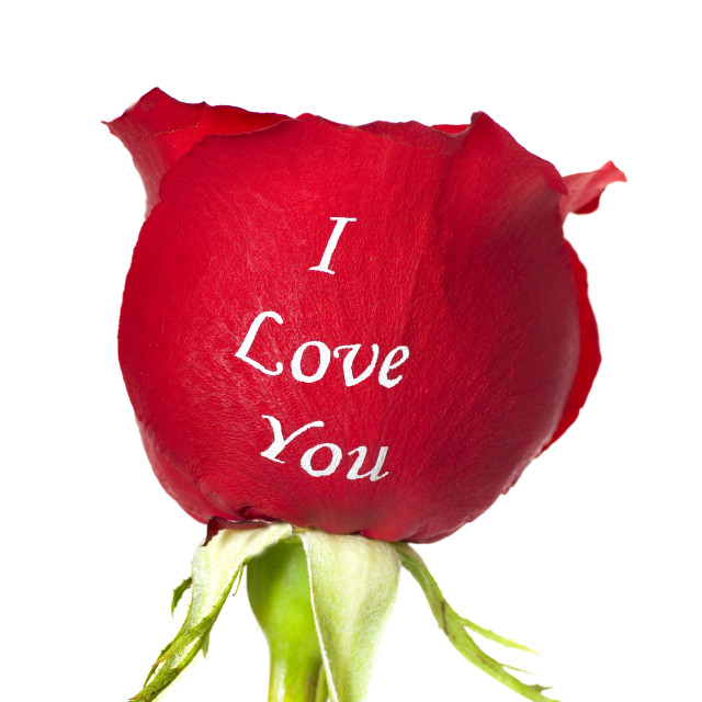 """""""Red rose with I Love You printed on it"""" stock image"""