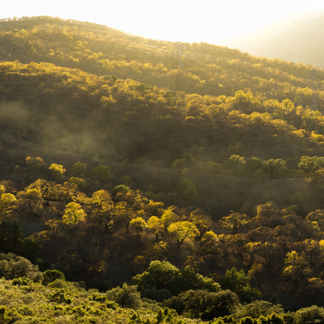 """Colourful chestnut forest in the mountains of Genal valley, sunset, Serrania de Ronda, Southern Spain."" stock image"