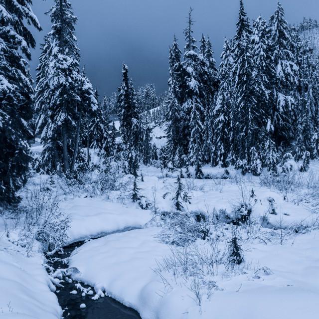 """Cypress Mountain"" stock image"