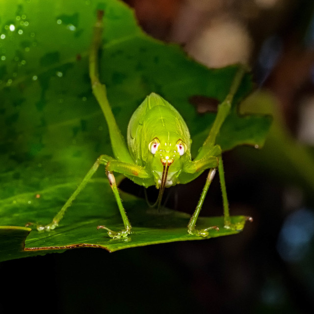 """Grasshopper"" stock image"