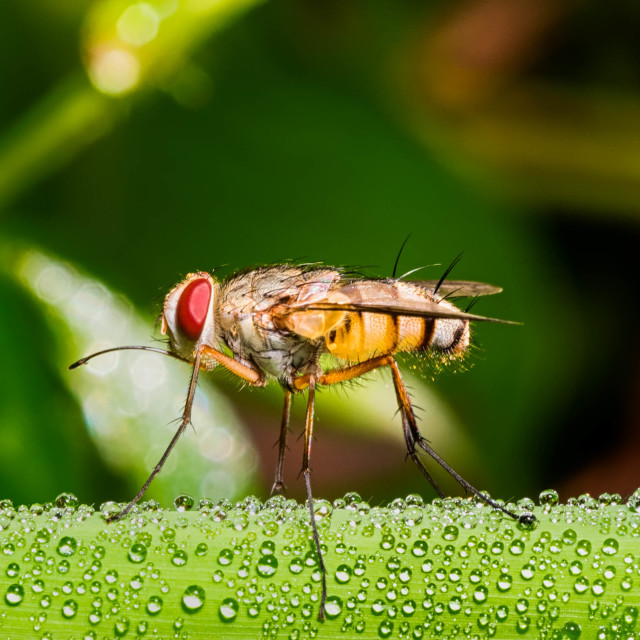 """close up on a fly"" stock image"