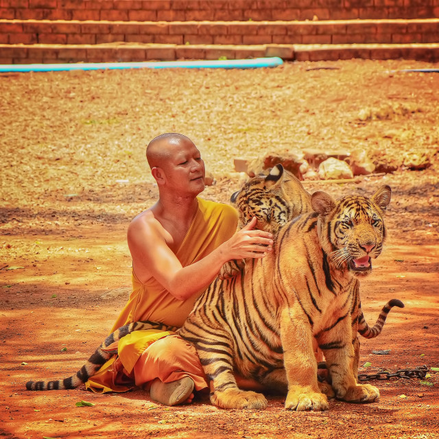 """""""Monk with his pets"""" stock image"""