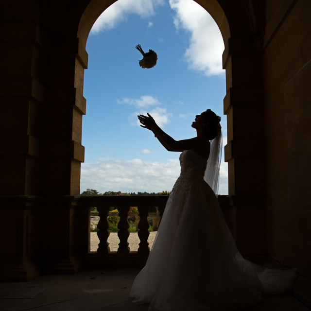 """Bride silhouette"" stock image"