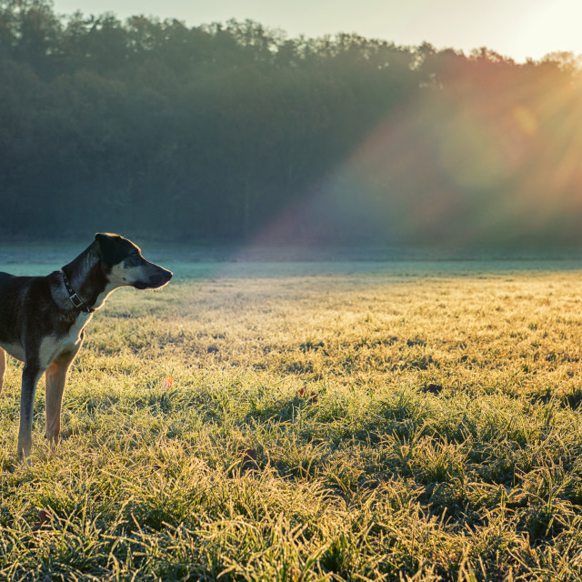 """Dog and winter sun"" stock image"