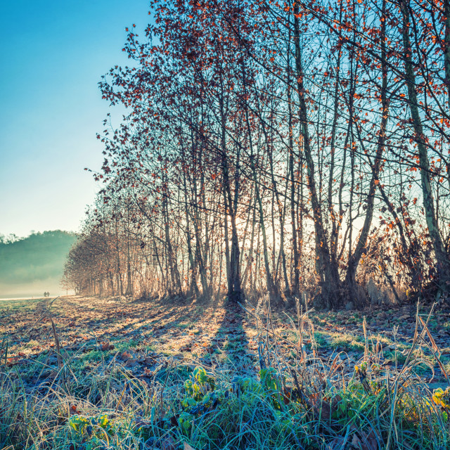 """Frozen morning"" stock image"