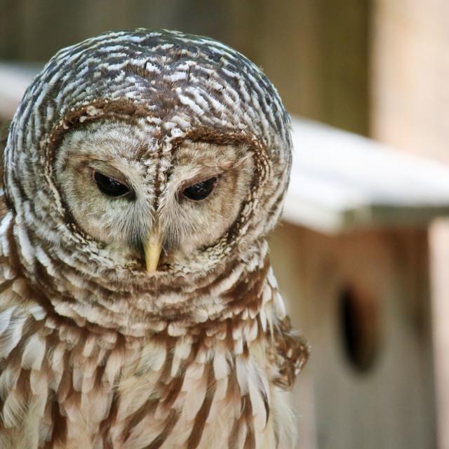 """Owl Expression"" stock image"