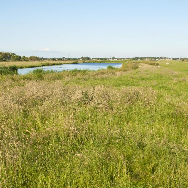 """Ilperveld, Noord-Holland; Ilperveld, Netherlands"" stock image"