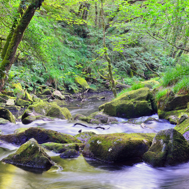 """""""The river Fowey in Cornwall as it flows through Golitha Falls on the southern edge of Bodmin Moor"""" stock image"""