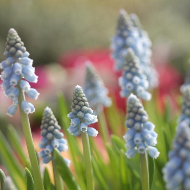 """Soft Dreamy Flowers"" stock image"