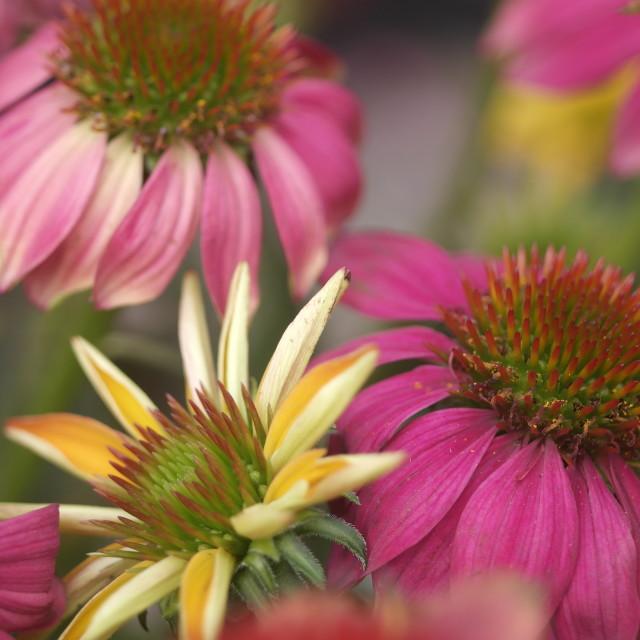 """""""Floral Colors Pop!"""" stock image"""
