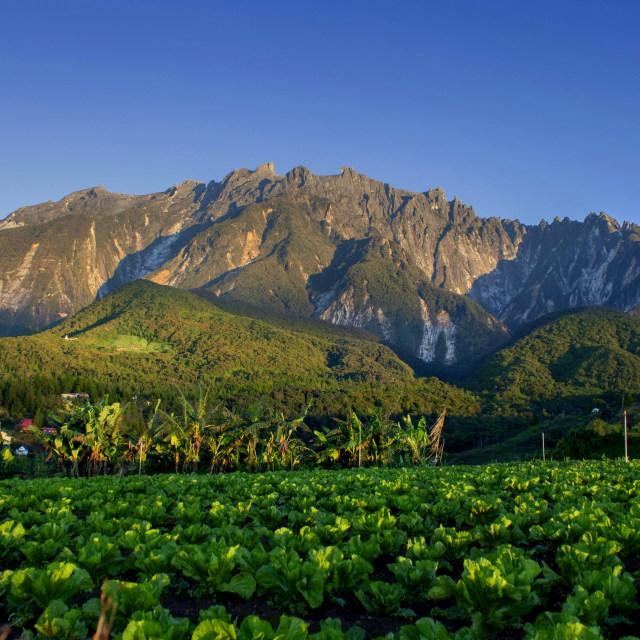 """""""Mount Kinabalu"""" stock image"""