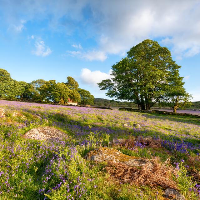 """Emsworthy Mire on Dartmoor"" stock image"