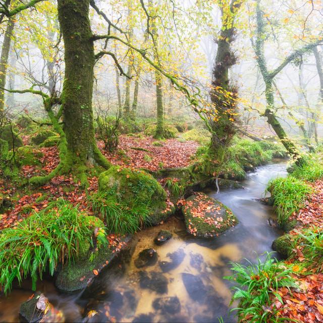 """""""Foggy Woods"""" stock image"""