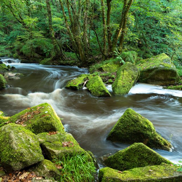 """The River Fowey at Golitha Falls"" stock image"