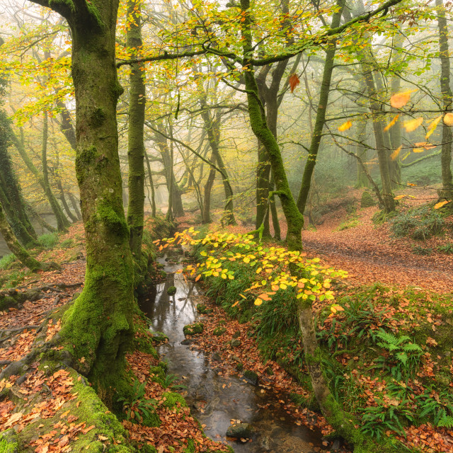 """Misty Autumn Woods"" stock image"