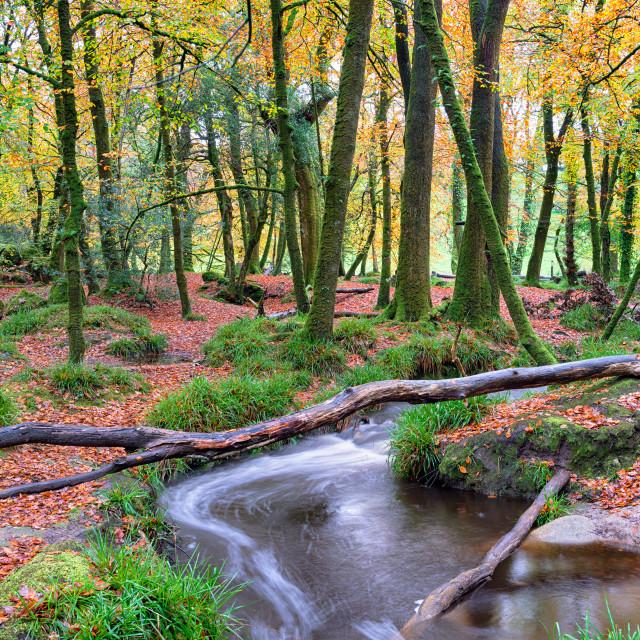 """Beautiful Woodland Stream"" stock image"