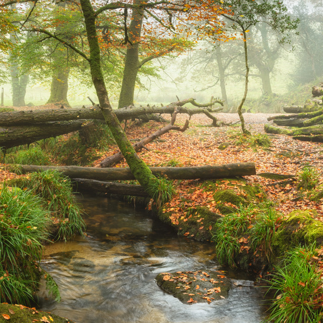 """Autumn Woods Panorama"" stock image"