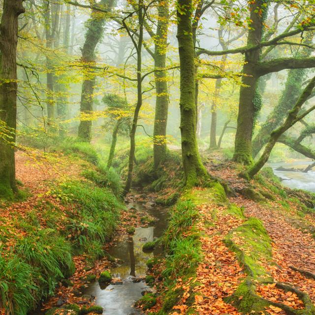 """Autumn Woods"" stock image"