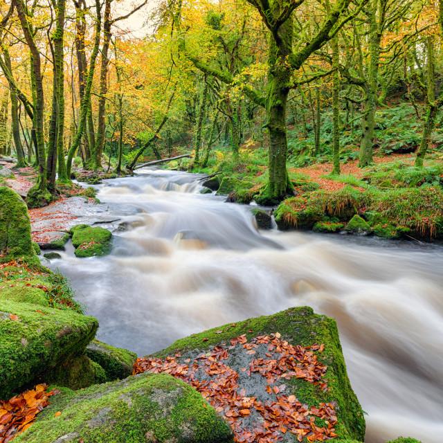 """Autumn at Golitha Falls in Cornwall"" stock image"