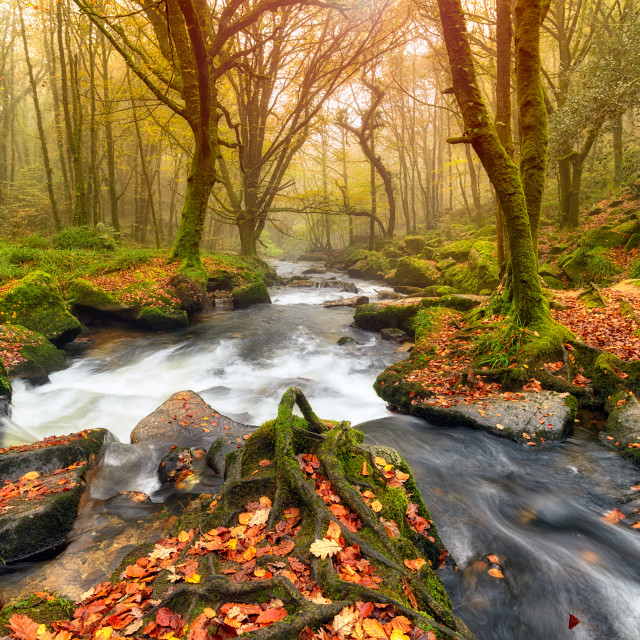 """""""Autum Forest River"""" stock image"""