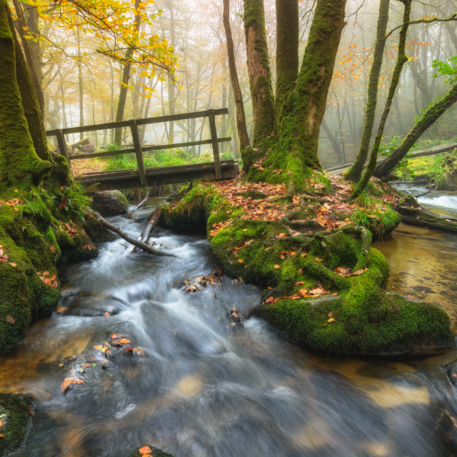 """""""Foggy Woodland Stream"""" stock image"""