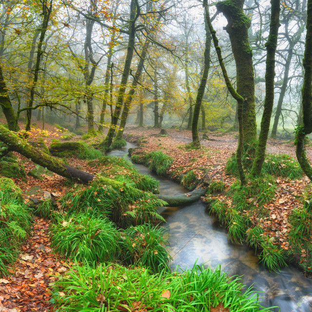 """""""Autumn Forest"""" stock image"""