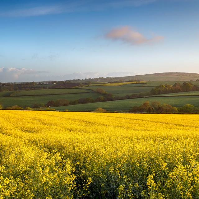 """""""Spring Fields at Callington in Cornwall"""" stock image"""