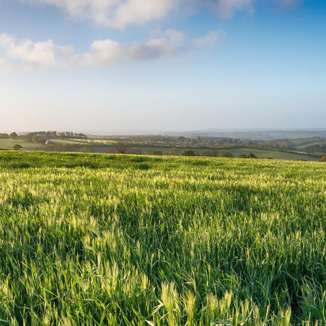 """English Countryside"" stock image"