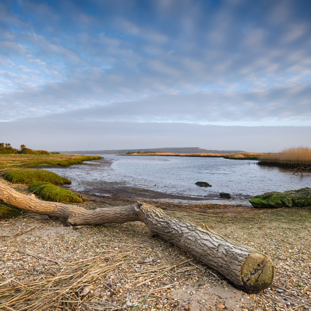 """Stanpit Marsh"" stock image"