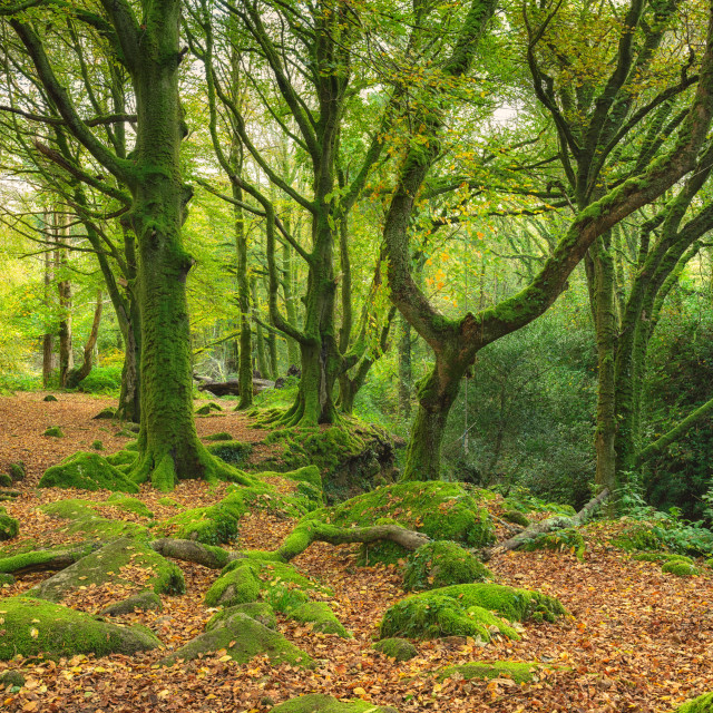 """Green Mossy woods"" stock image"