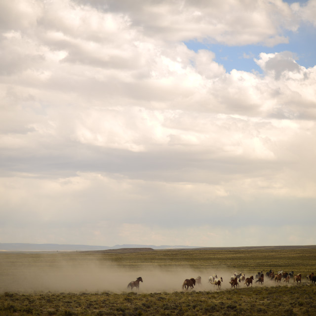 """Wild Horses of the American West"" stock image"