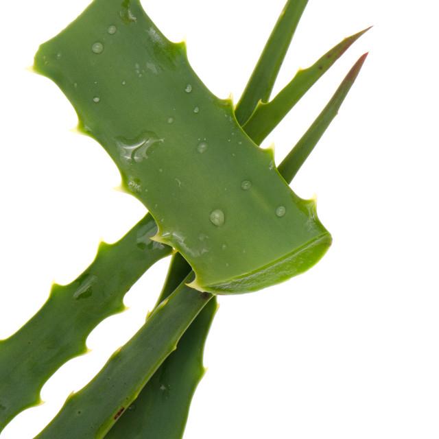 """Aloe"" stock image"