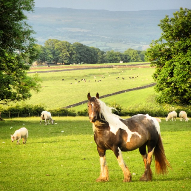 """""""Horse in the Summer"""" stock image"""