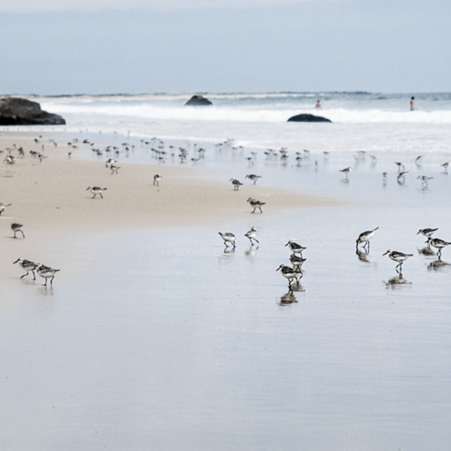 """Birds on beach"" stock image"