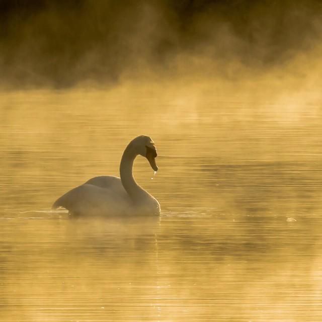 """Morning Serenity"" stock image"