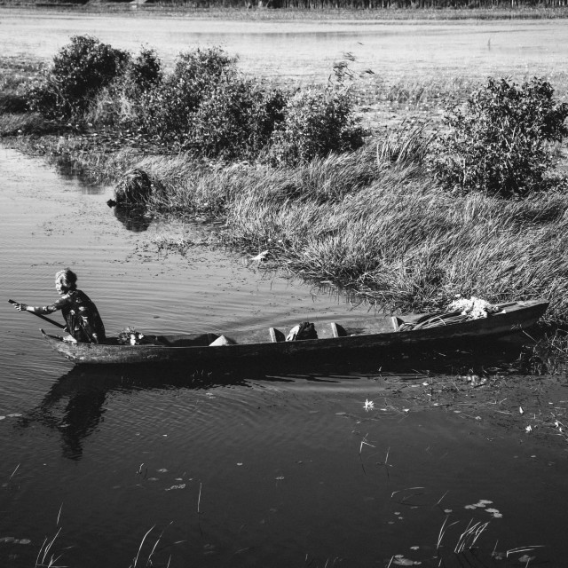 """""""An old woman collect water lily in a lake - Vietnam (black and white)"""" stock image"""