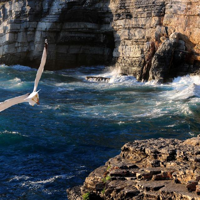 """""""Seagull in Portovenere"""" stock image"""