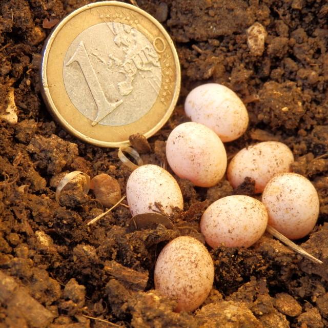 """""""Snake or Lizard Eggs"""" stock image"""