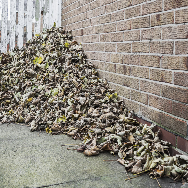 """Pile of leaves"" stock image"