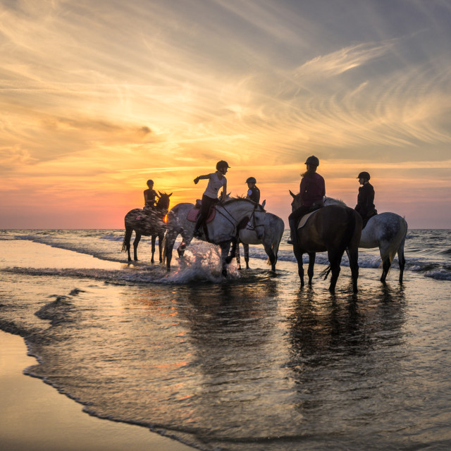 """Horses, riders and Baltic Sea"" stock image"