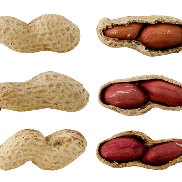 Смешные картинки арахиса, детский сад